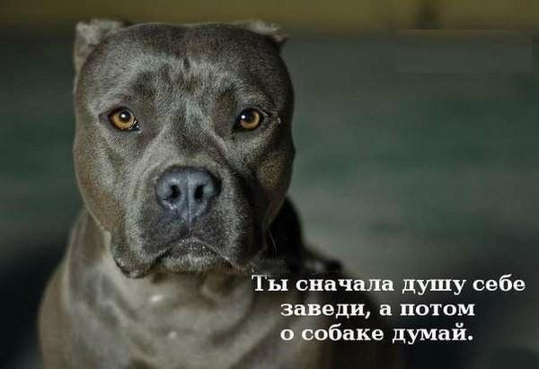 http://starsdust.ru/article/article141.jpg
